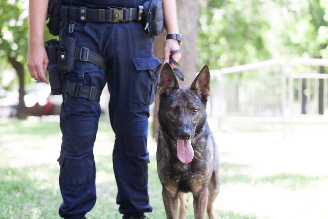 agent sécurité uniforme